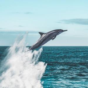 delfin-alta-mar