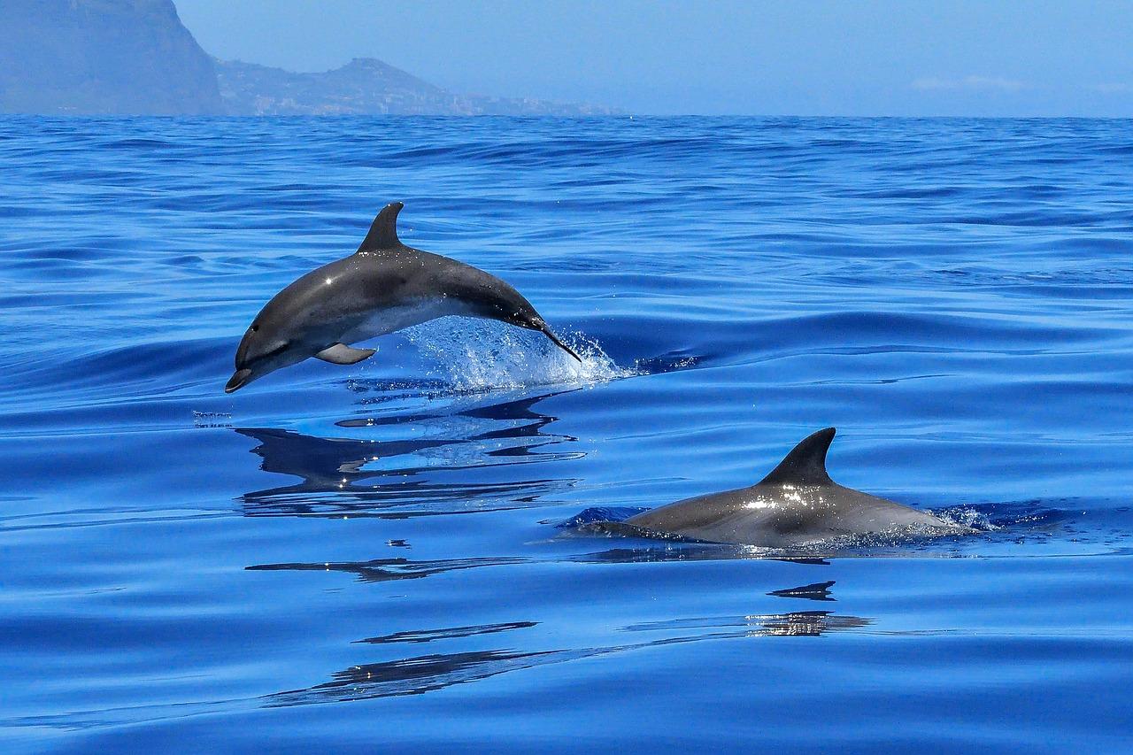 delfines-alta-mar