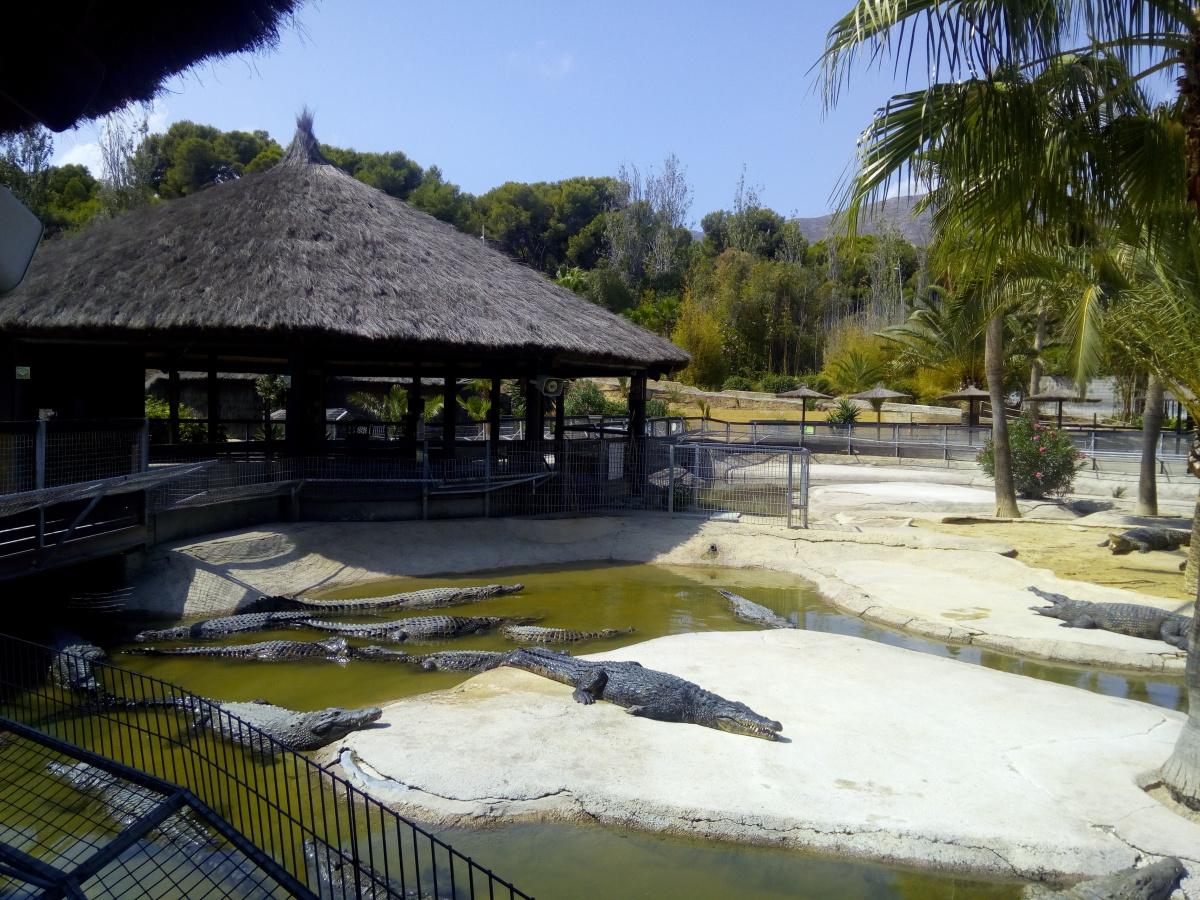 cocodrilos-park