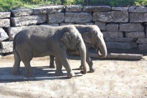 elefante-selwo-marina
