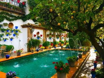 El lago de Andalucia y patio Cordobés ( Incluye almuerzo).